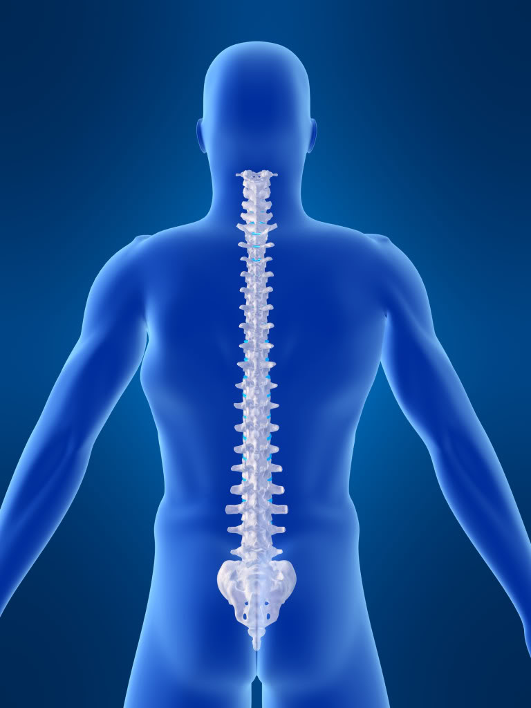 Chiropractor for Spinal Health